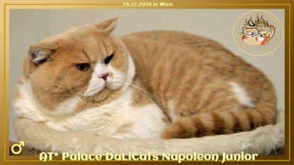 AT* Palace DaLiCats NAPOLEON JUNIOR