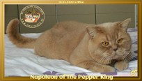 GIC Napoleon of the Pepper King